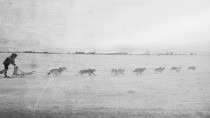 How Sled Dogs Helped Win World War I