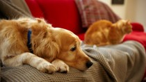 Many Cats and Dogs are victims of domestic violence