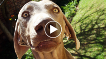 Pet Parents Tell Their Pups They're Adopted and Their Reactions are Priceless
