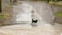 Dog survives mudslide