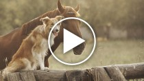 This Budweiser Commercial May Just Top Them All