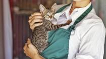 Volunteer holding a shelter cat