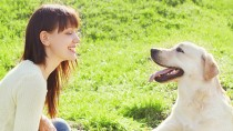 Do Dogs Recognize Human Faces?
