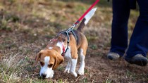 Is Your Dog a Picky Pooper?