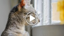 Kitten Sees Snow For The First Time, Adorableness Ensues