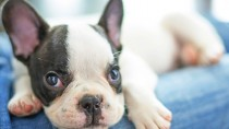 Most Popular Dog Names of 2014