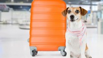Pilots and Paws: Working to Give Animals the Loving Home They Deserve