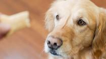 Dog waiting for treat