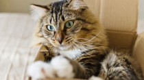 Why do Cat's Like Boxes? New Study Offers New Answers