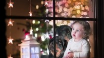 Rottweiler Holiday Surprises