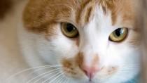 Show Some Love: Be A Foster Pet Parent