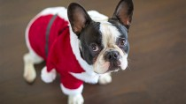These Pets Got Into the Holiday Spirit!