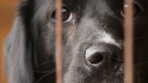 The Top 5 Reasons to Adopt from a Shelter