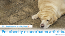 5 Reasons Why Pet Obesity is a Big Deal