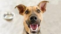 Happy dog looking at camera