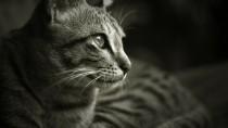 Pet Trusts and Pet Wills