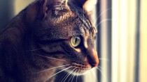 The 3 Most Common Cancers in Cats