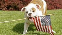 Keep Your Pet Safe This 4th of July