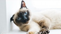 5 Cat Diseases Vets Don't Think You Know, But Should