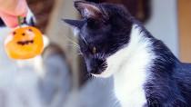 Cat with tiny pumpkin