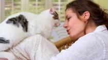 6 Tips for Exercising Your Senior Cat