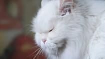 Senior Whit Cat