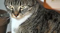 Feline Acne