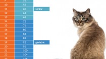 Cat age chart