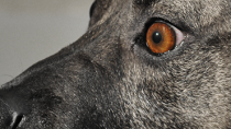 Are Dogs Really Colorblind?