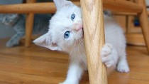 Dr. Ruth's Top 5 Reasons to Visit the Veterinarian With Your New Kitten