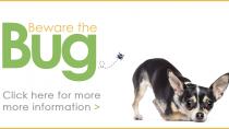 Dogs, Ticks and Tick-Borne Parasites
