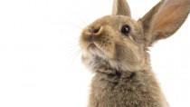 Bunny Care 101