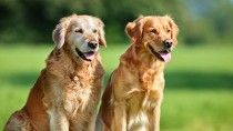 Caring for a Senior Dog: 7 Healthy Habits
