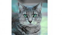 Cryptosporidiosis in Cats