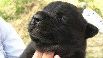 Cleft Lip and Palate in Puppies