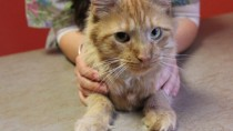 What you need to know about declawing cats.