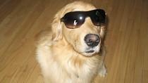 Conjunctivitis in Dogs