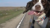 Dogs in Cars: Should My Dog Hang His Head Out the Car Window?