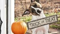 Dr. Ruth's Halloween Hazards
