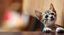 Feline Panleukopenia: Protect Your Cat from this Often Fatal Disease