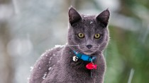 Frostbite in Cats and Dogs
