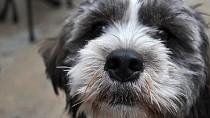 Anal Sac Disease in Dogs