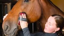 Horse Grooming 101