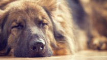 How Are Feeding Tubes Used When Your Dog Won't Eat?