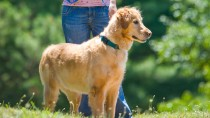 Keep Your Dog Cool This Summer: Heatstroke, Part I