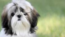 Kidney Stones in Dogs