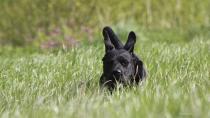Lyme disease in dogs