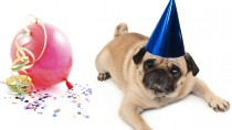 New Year's Don'ts For Your Pet