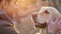 golden retrievers can get hemangiosarcoma