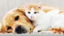 A dog and a cat relaxing together.
